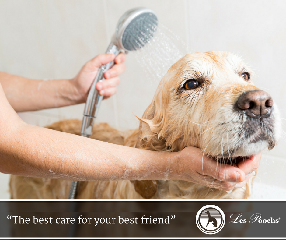 Pet Care: Giving Your Dog A Bath, Some Basics