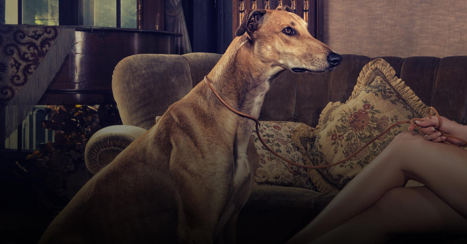 Pamper Your Pooch in the Lap of Luxury with Les Poochs