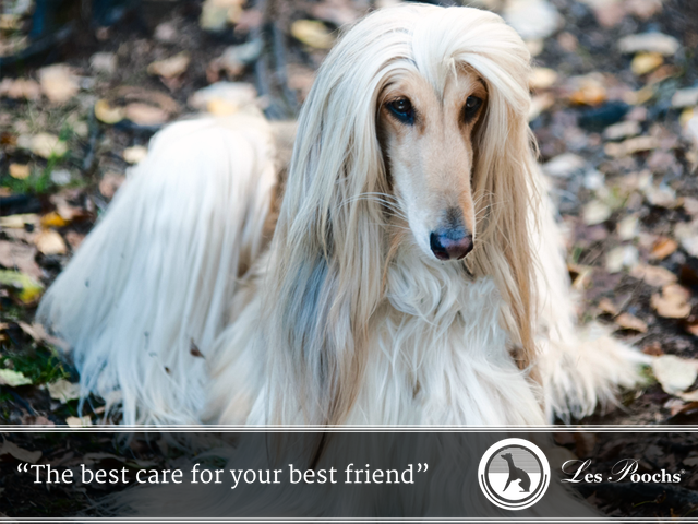 Caring for long haired dogs