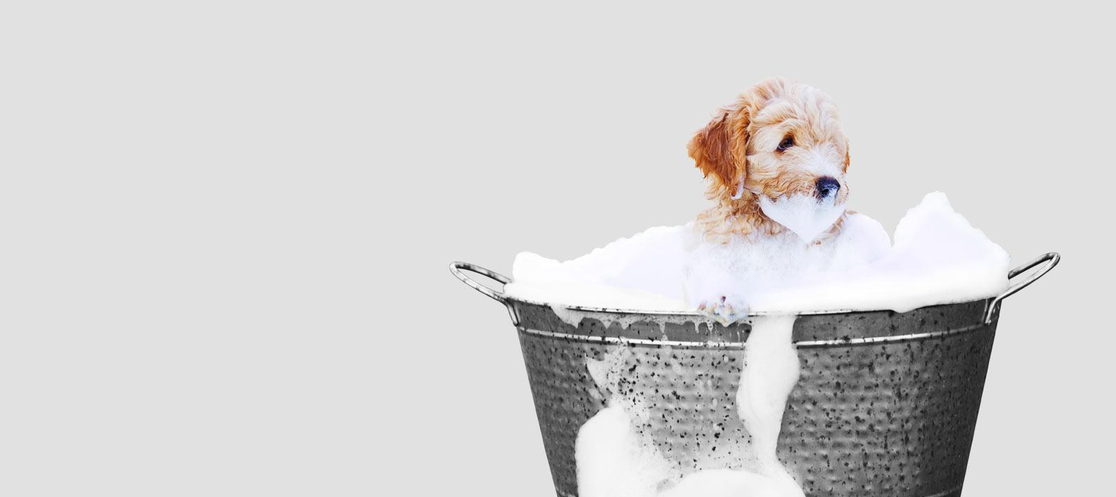 Gentle, Effective Dog Shampoos