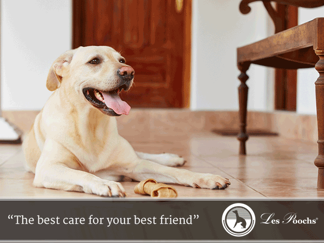 Home safety for dogs