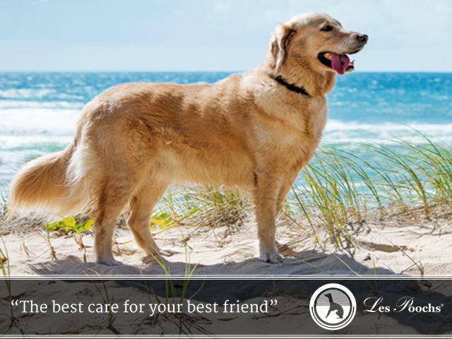 Keeping your dog's coat shiny