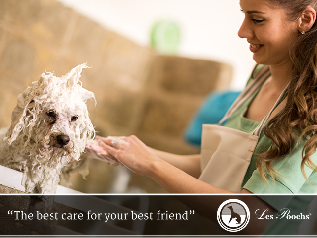 Run a thriving dog grooming business
