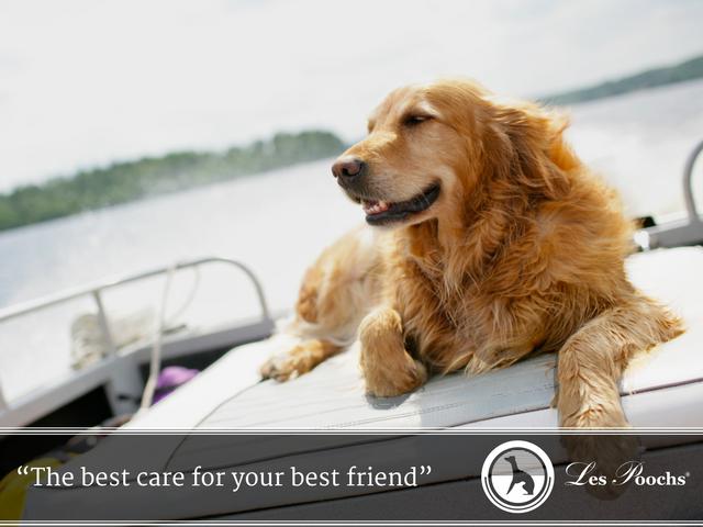 Summer dog safety